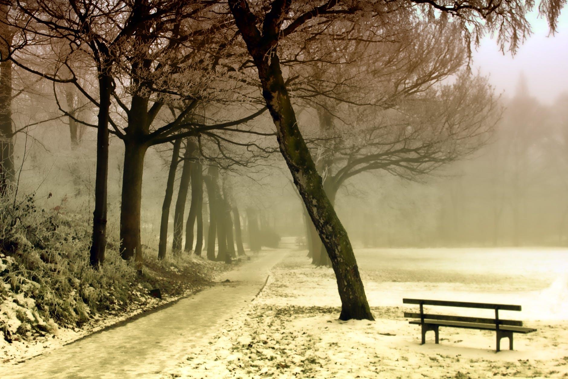 bench cold dawn environment