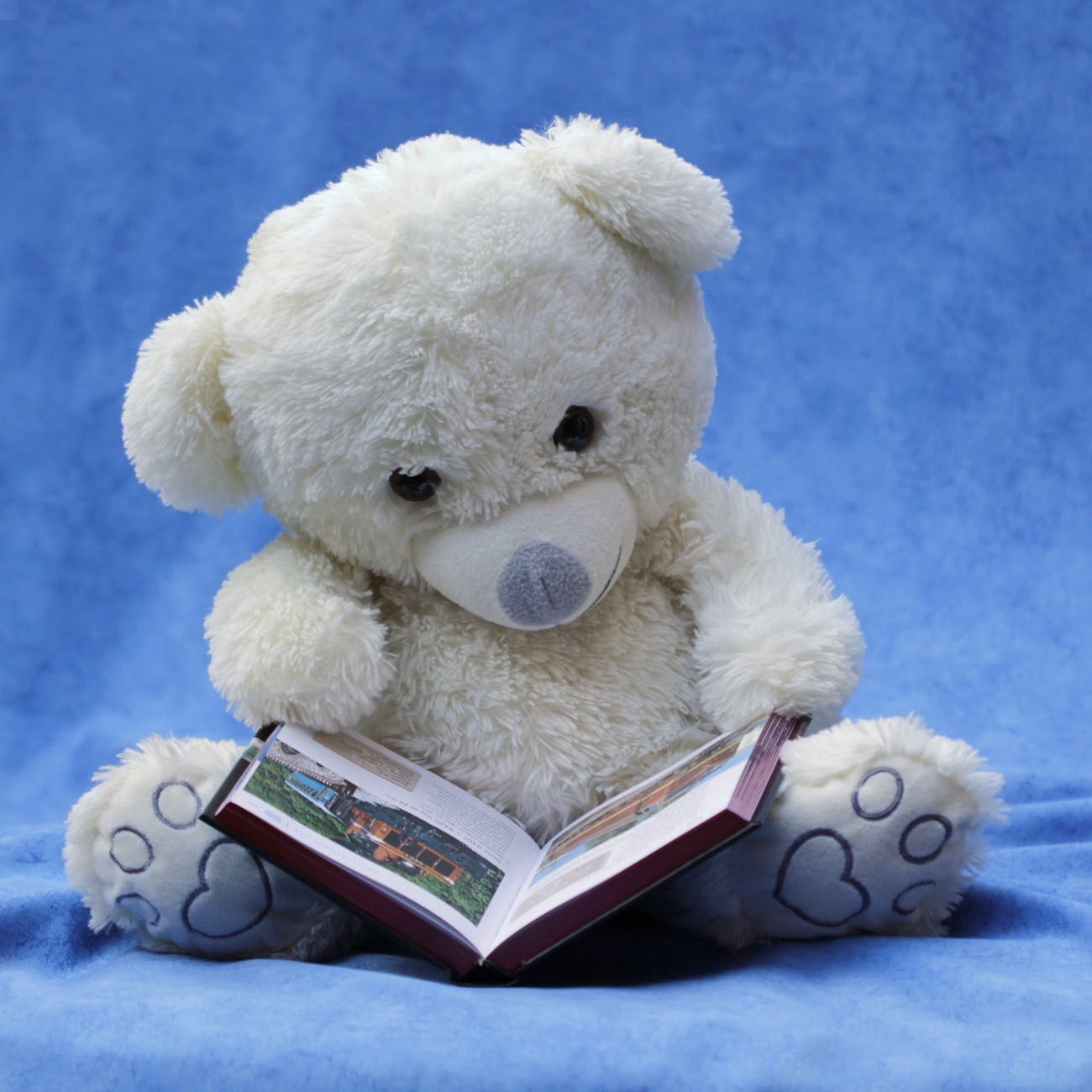 white teddy bear with opened book photo