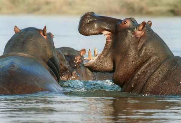 nature water animal playing